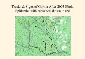 Impact of Ebola 2